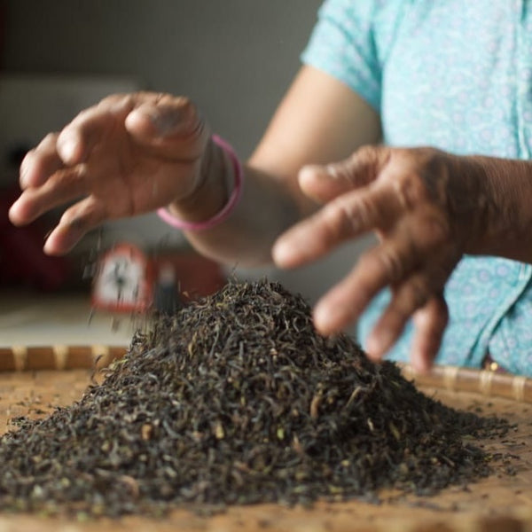Hand Rolled 2020 First Flush Darjeeling Tea [Niroulas Tea Cooperative]