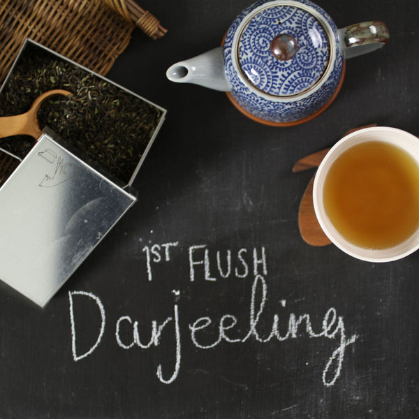 First Flush Darjeeling Tea - Comins Tea - 4