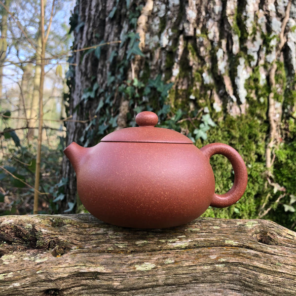 Mr Fans Fully Handmade large 300ML Yixing Teapot [降坡泥 ZHI YUAN JING FANG WORKSHOP]