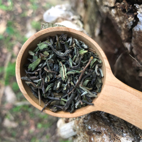 2021 First Flush Darjeeling Tea [Glenburn]