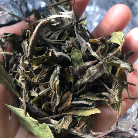 Mr Zhengs [First Grade Organic] Gong Mei 2018