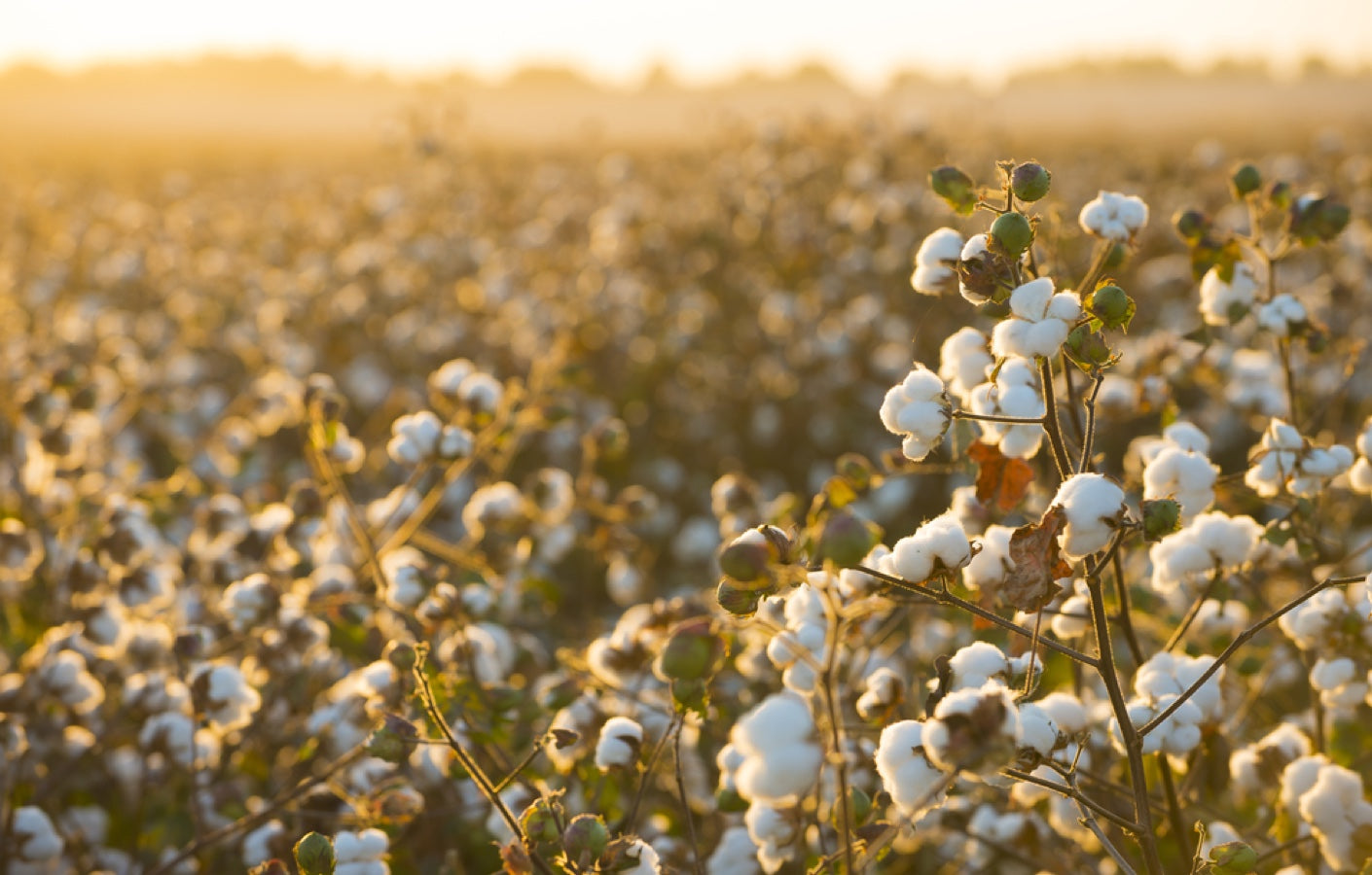 Organical cotton is the chosen material for our ethical clothing