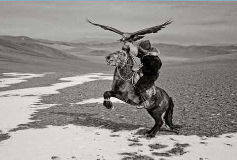 Training Kazakh, Eagle-Horse_Deloun, Highlands, Olgi - Mongolia - Photographie de Hamid Sardar