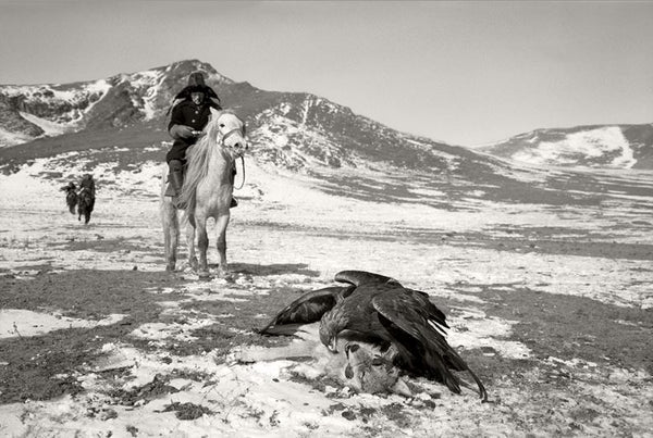 Eagles on Wolf, Deloun Highlands, Olgii Province - Mongolia - Photographie de Hamid Sardar