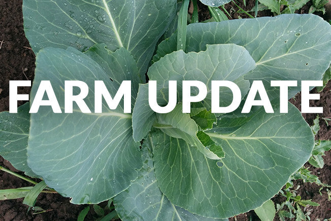 Update from Our Goodness Me! Farmers!