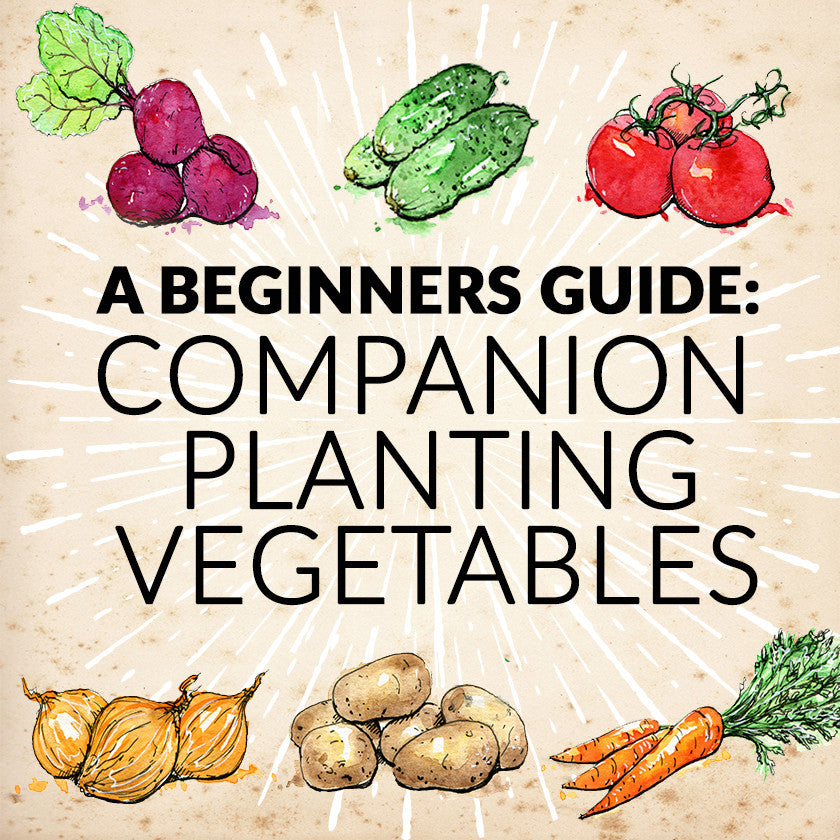 Beginners Guide: Companion Planting Vegetables
