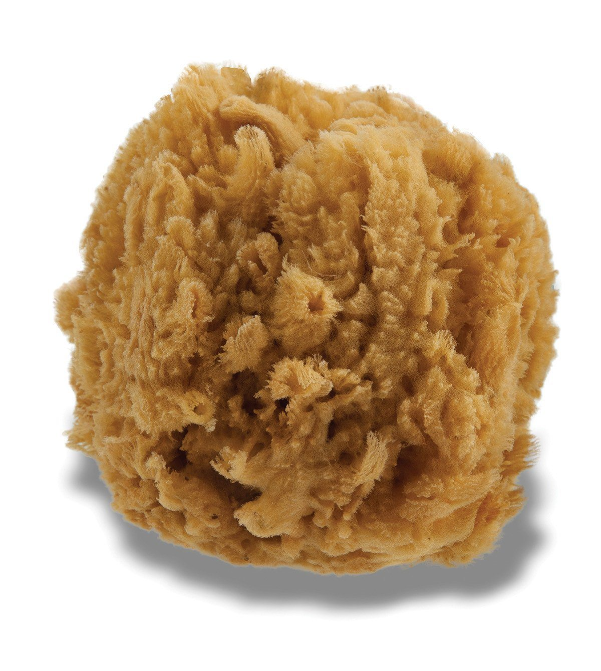 Personal Care - Urban Spa - The All Natural Sea Sponge