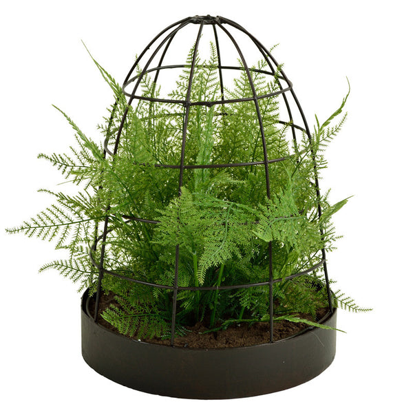 Asparagus Fern - The Picnic Store - 1
