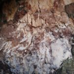 what is mycelium: a beneficial organism