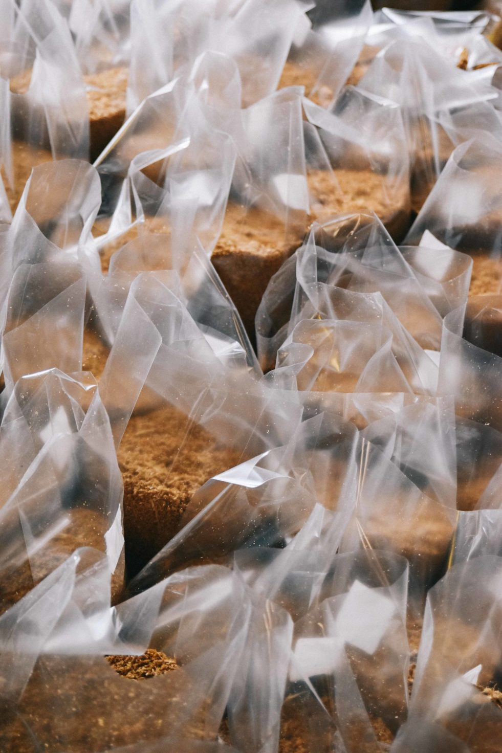 Mushroom growing supplies include filter patch bags.