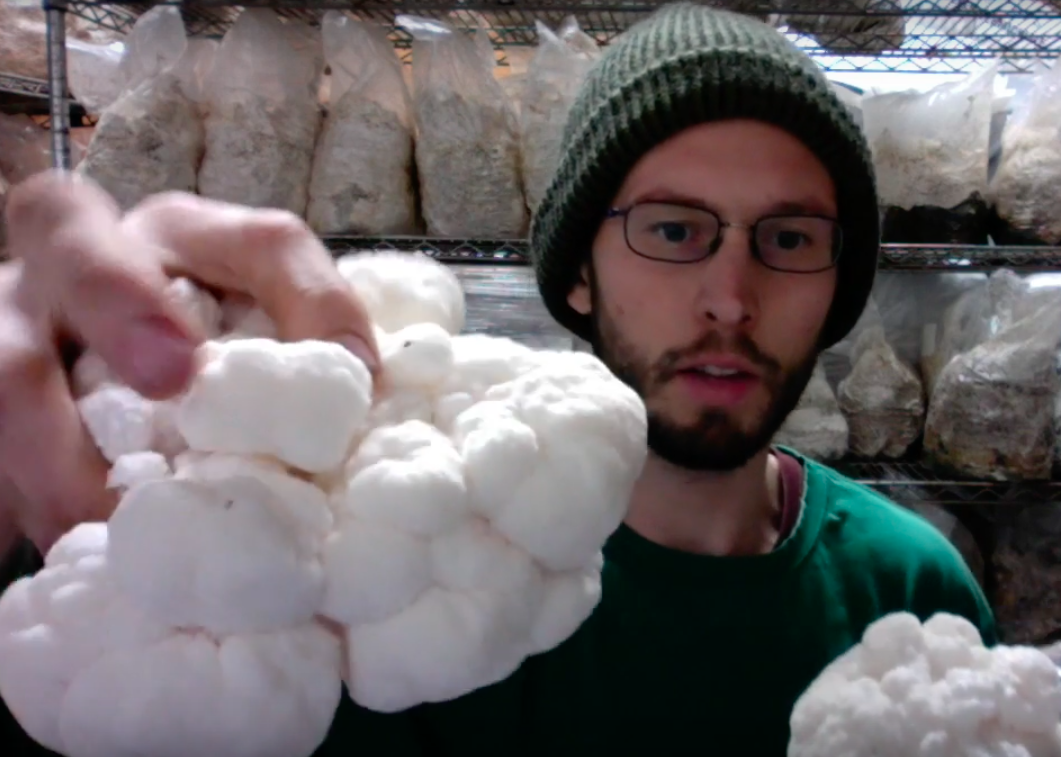 Grow lion's mane mushroom and reap a tasty harvest.