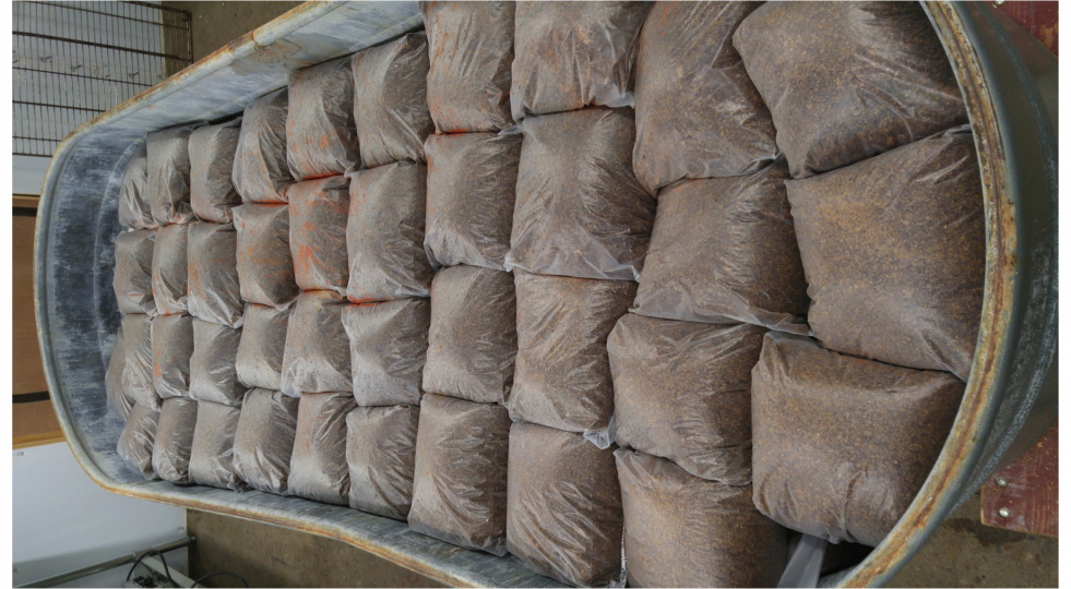 Starting a mushroom farming business: Growing mushrooms at a mushroom farm with bags of substrate.