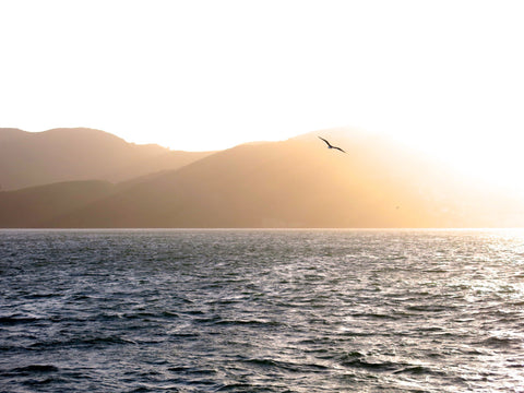 Bird flying over sea with mountain coast and sunset in background