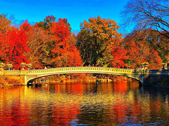 Bridge over the river in Central Park with bright colored trees in the background