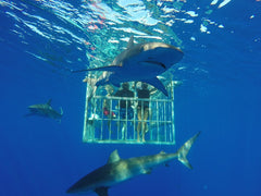 People in a cage underwater with sharks swimming around