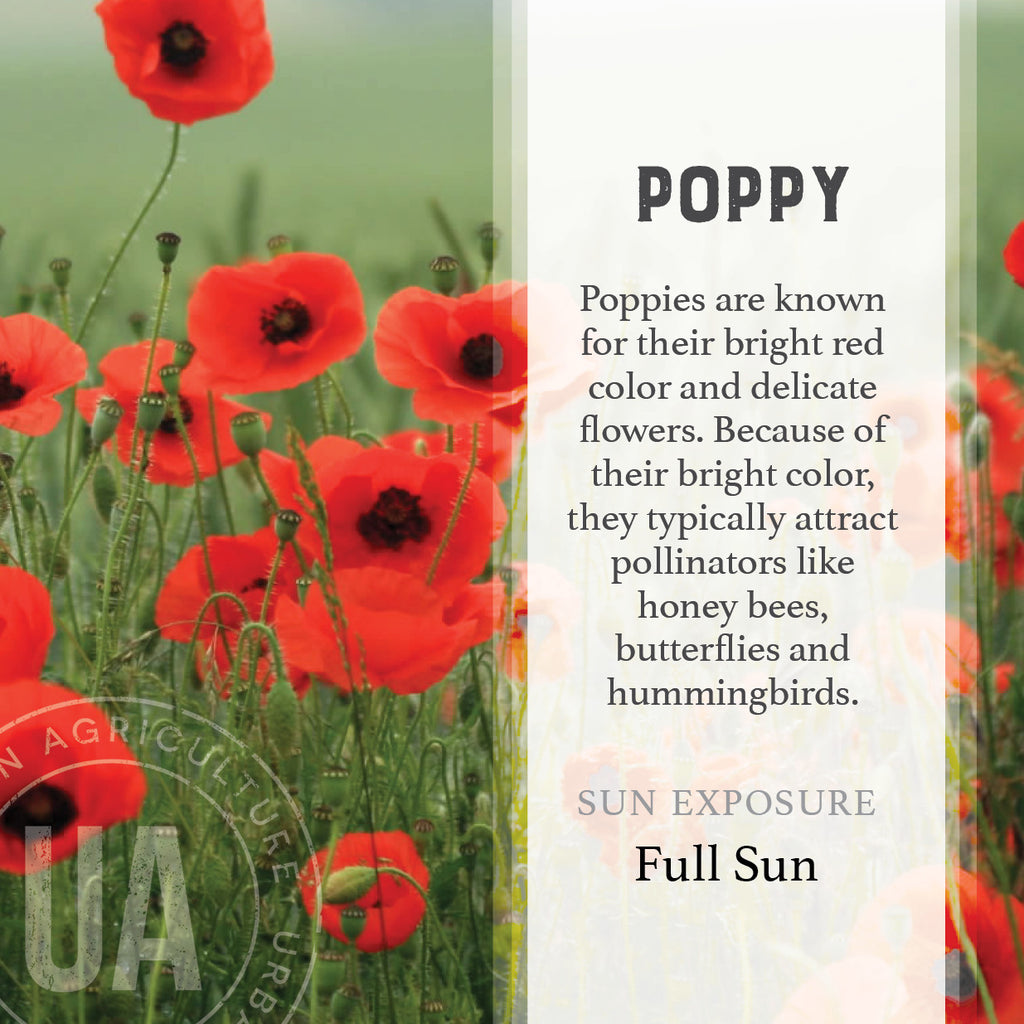 Poppy Urban Agriculture Co