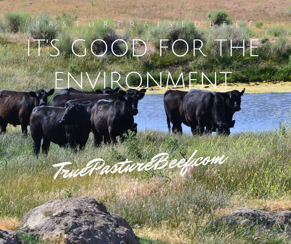 Pasture Raised Grass Fed Beef: It's Good for the Environment