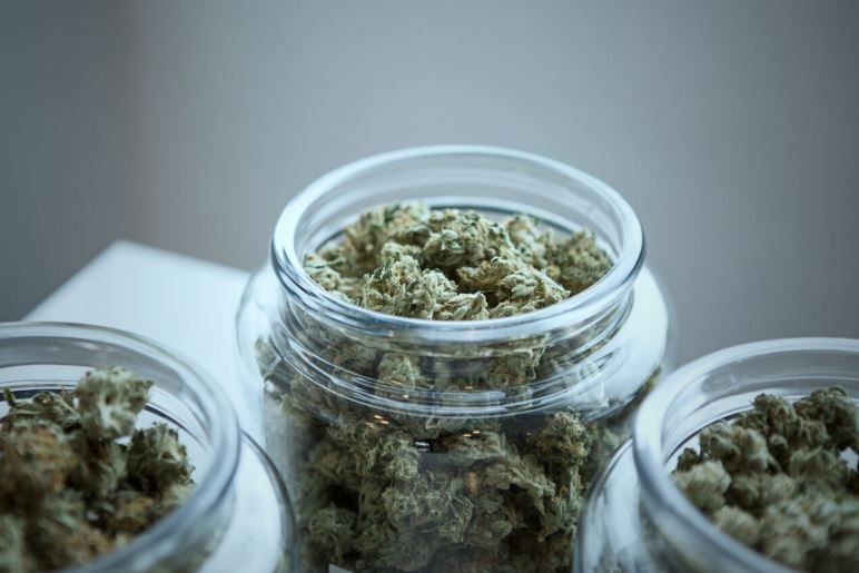 Three glass jar containing cannabis strains