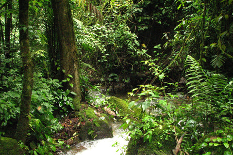 Honduran rainforest mountain stream Comayagua National Mountains