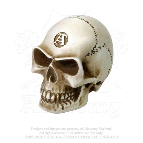 V40 - Bone Colored Skull Gear Knob by Alchemy of England