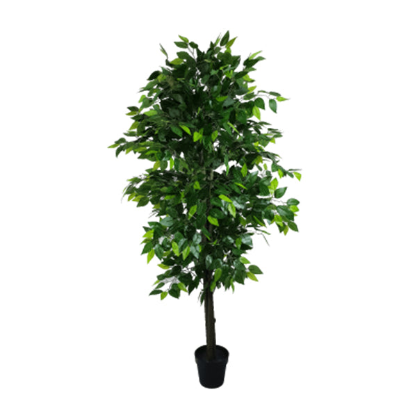 Mixed Green Bushy Ficus 180 Cm