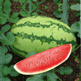 Watermelon MAHY Fortuna - (50g)