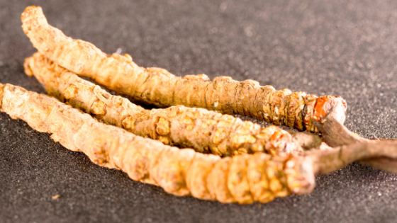 The Evidence-Backing: Cordyceps