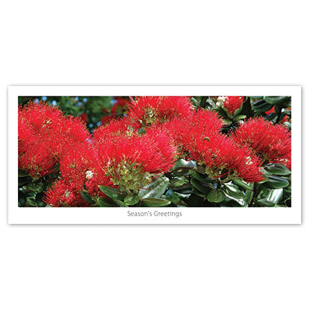 Seasons Greeting Card - Blooming pohutukawa