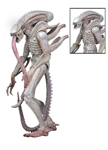 Aliens Series 9 - 7″ Scale Action Figure – Albino Alien