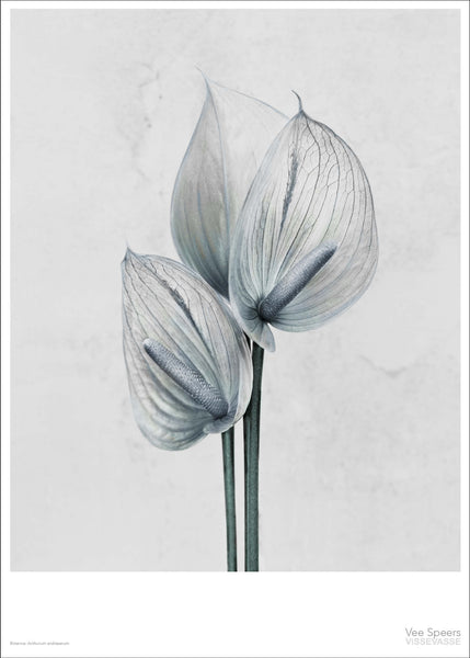 Botanica poster with white flower from Vee Speers