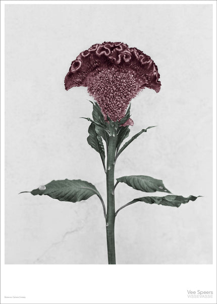 Botanica poster with red flower from Vee Speers