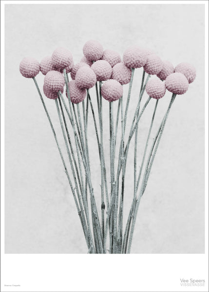 Botanica poster with pink drum sticks from Vee Speers