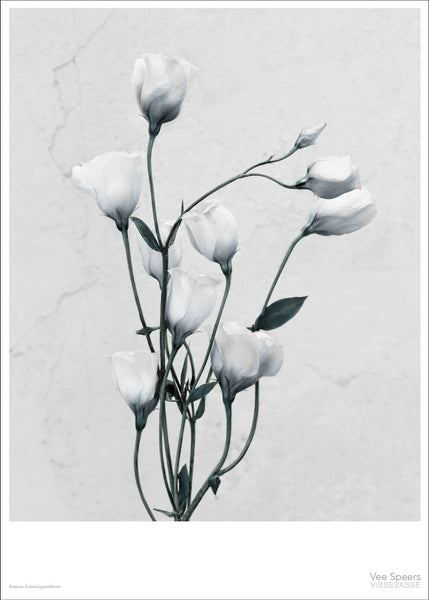 Botanica poster with white flowers from Vee Speers