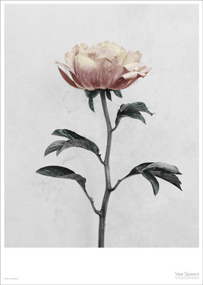 Botanica poster with paeonia