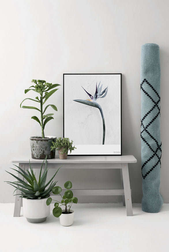 Botanica flower poster from Vee Speers