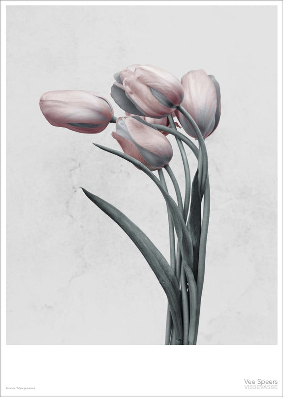 Botanica poster with pink tulips from Vee Speers