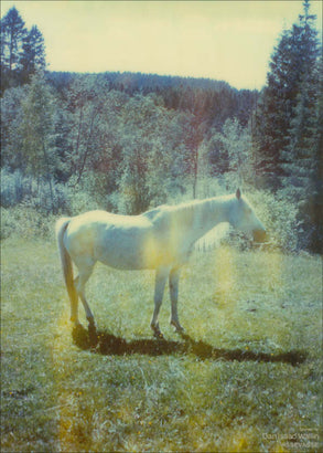 Photo poster with horse from Dan Isaac Wallin
