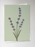 Card with lavender from ViSSEVASSE