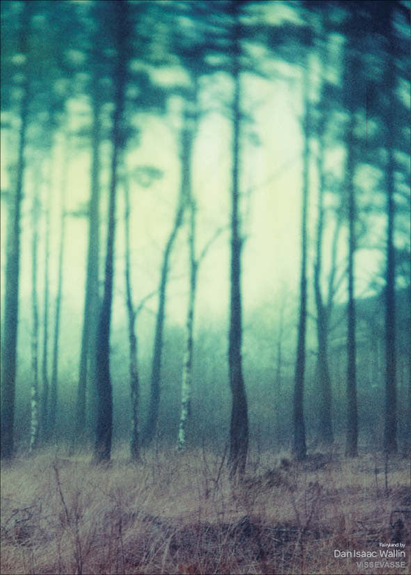 Fairyland Photo Poster With Forest From Dan Isaac Wallin