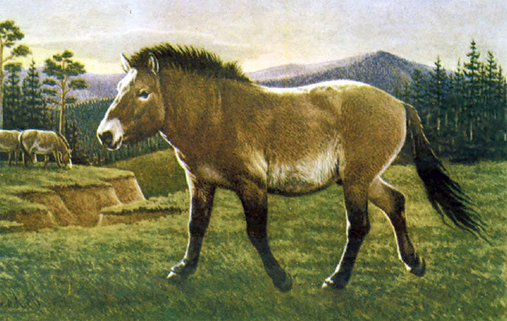 Scientists Are Trying To Clone A 42,000-Year-Old Foal To Bring Extinct Horse Back To Life