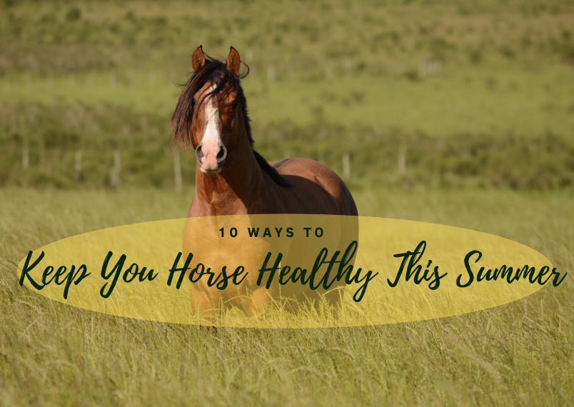 10 Ways To Keep Your Horse Healthy In The Summer
