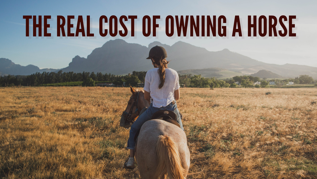 how much does it cost to own a horse