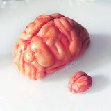 miniature brains in 1/3 and 1/12 scale