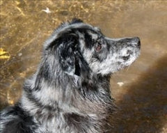 In memory of a once in a lifetime companion Mr. Blue April 1st, 2001 – June 14th, 2014