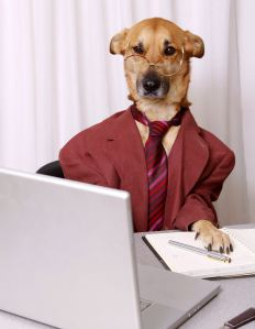 business_dog