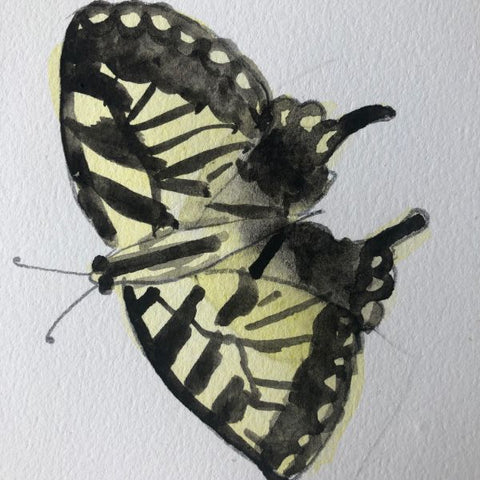 Eastern Tiger Swallowtail Butterfly Illustration