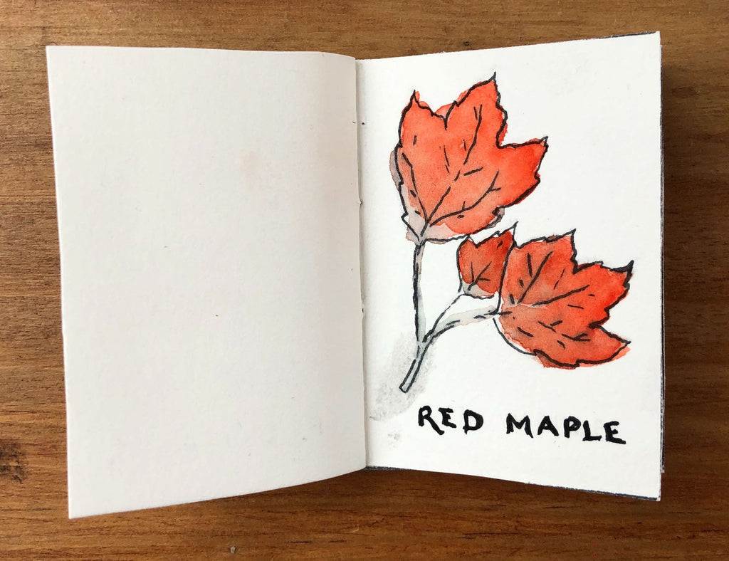 Red Maple Tree Illustration