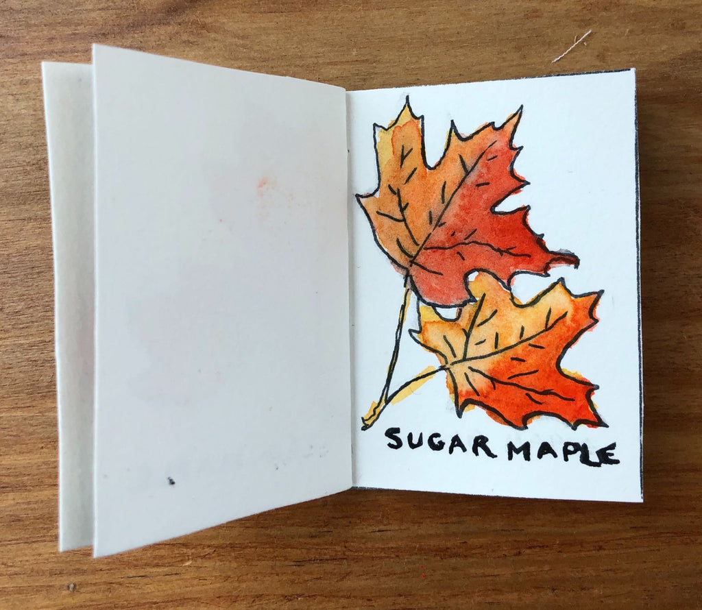 Sugar Maple Tree Illustration