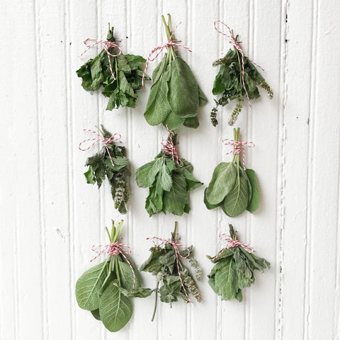 Herbs drying with twine