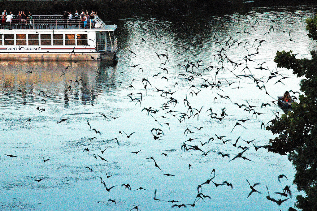 """Austin Bats #1"" ~ Mexican free-tailed bats stream out over Lady Bird Lake in Austin, TX at twilight."